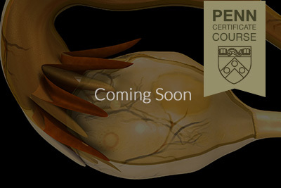 Pennmed gallery images 0000s 0000 coming soon